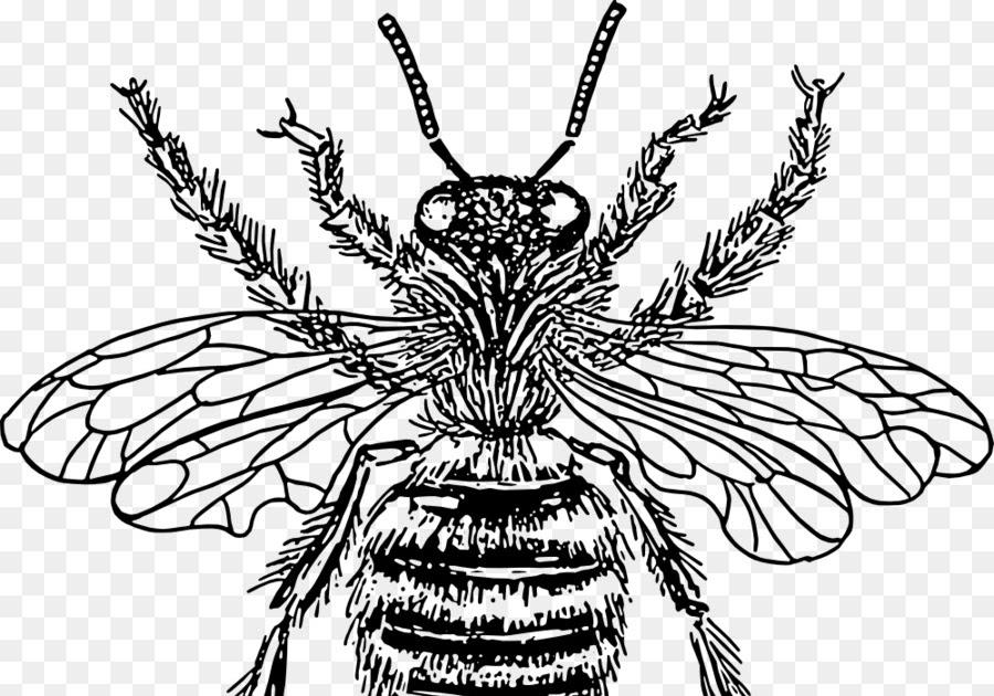 malvorlagen insekten queen  färben sie das bild