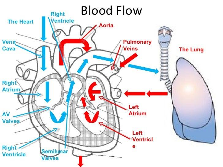 heart diagram 2 728