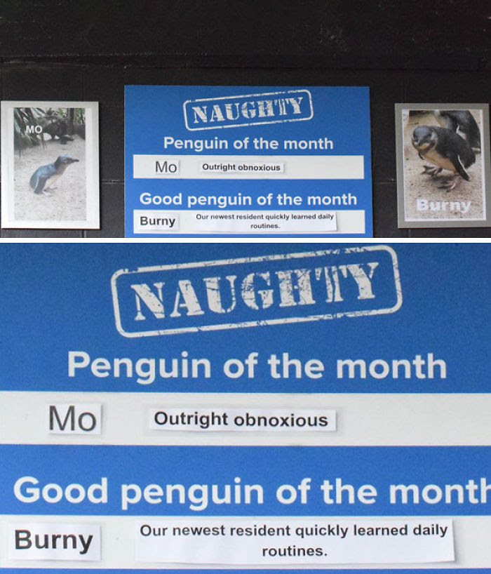 Funny-Penguin-Shaming-National-Aquarium-Nouvelle-Zélande