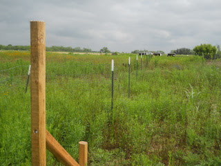 More Fence T-posts in Place