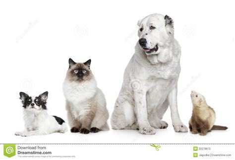 Group Of Dogs, Cat And Ferret Stock Photos   Image: 22278873