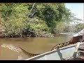 """Real and Amazing"" Catching Big Python Snake in The River -  Spectacular Trips"