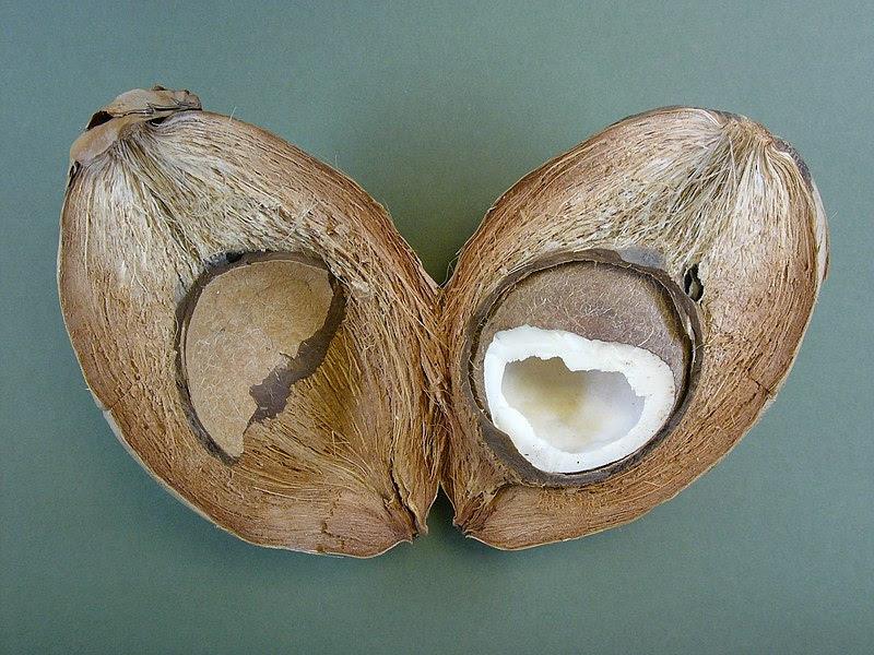 File:Cocco-nut hg.jpg