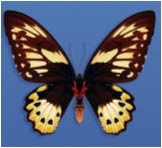 Figure 3: A butterfly's bilateral symmetry