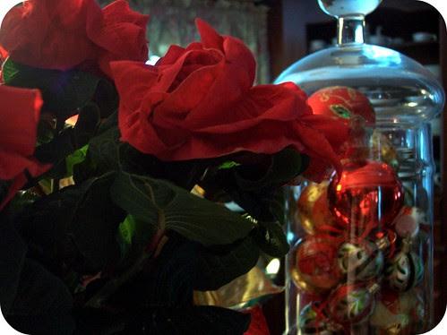 rose poinsettia 2