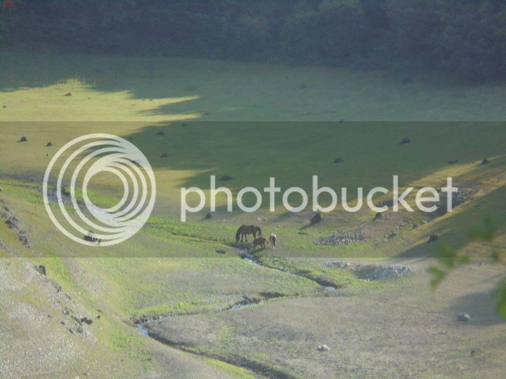 photo OKOLIN - SAIOA - ZURIAIN 14-07-15 176_zpszc6sbkea.jpg
