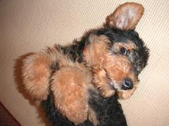 Cute lil' pup
