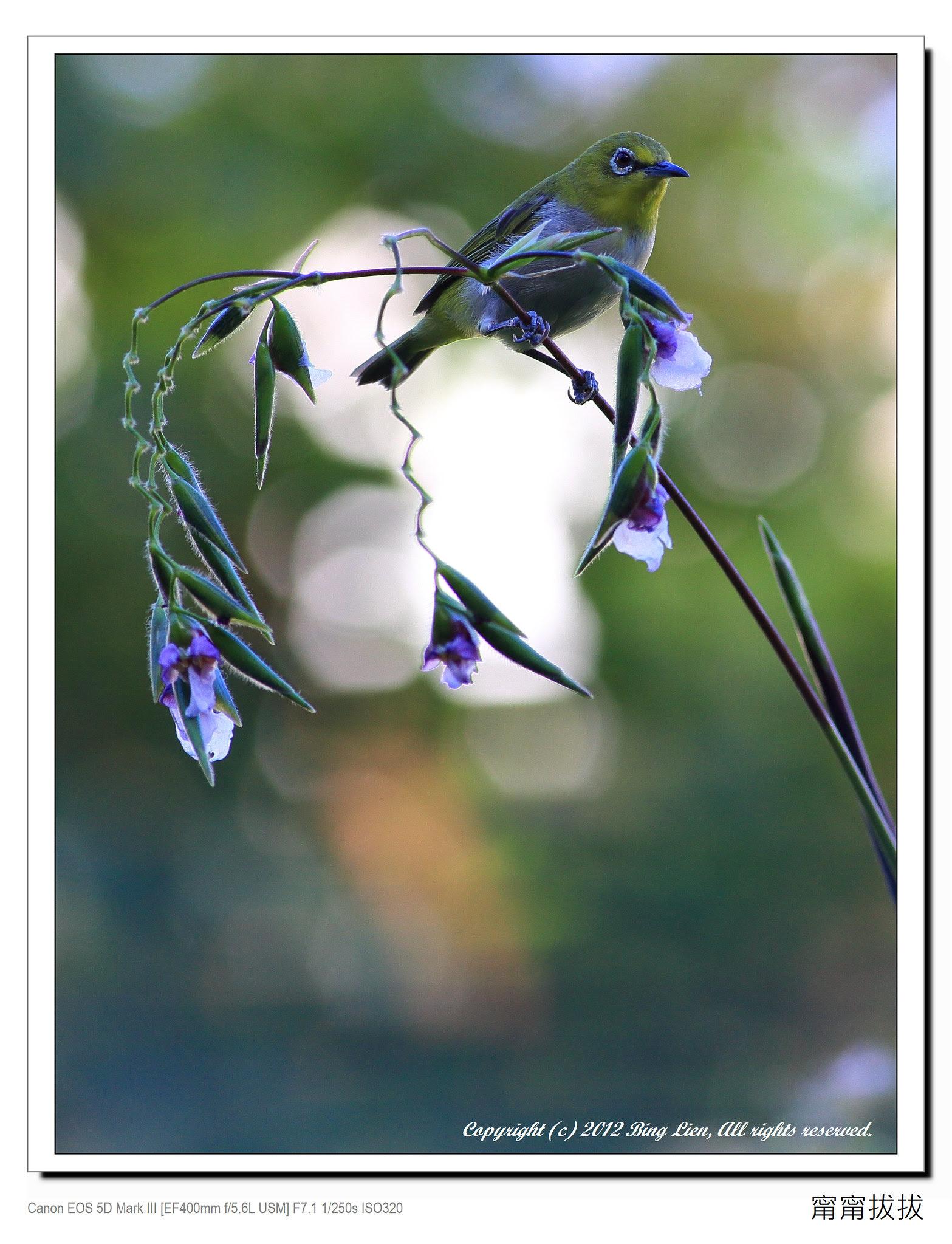 frame_BING8956