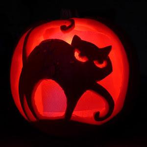 Pumpkin_cat_small