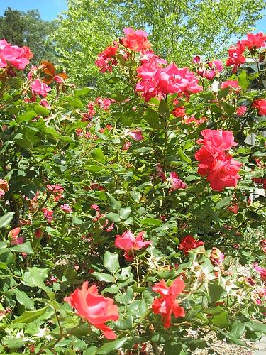 Frelinghuysem Arboretum! 2