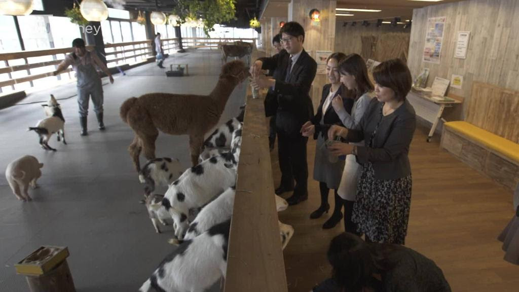 180416150212-farm-animals-in-offices-000