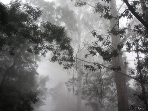 Amid mist