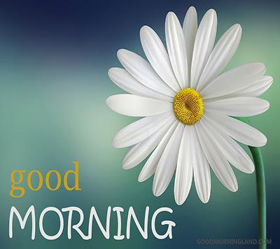 Good Morning Flower Images Free Download Good Morning Images