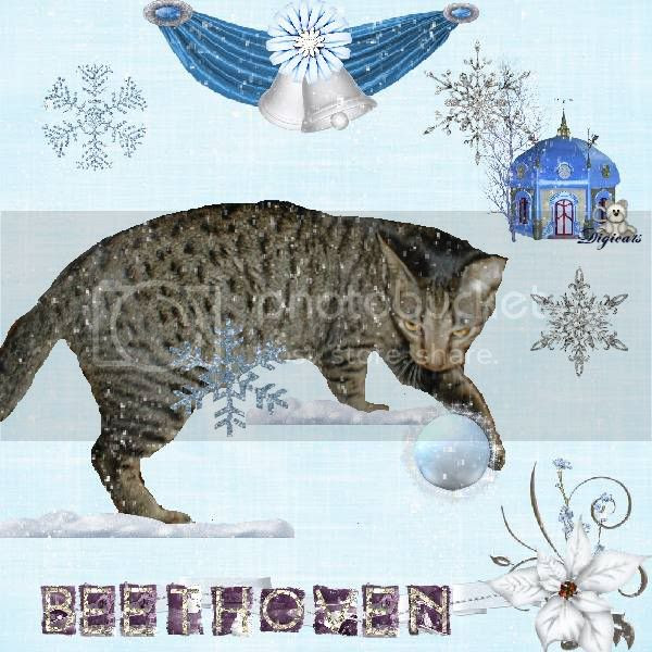 Tabby Cat,Domestic Cat,Catblogosphere Cats,Winter