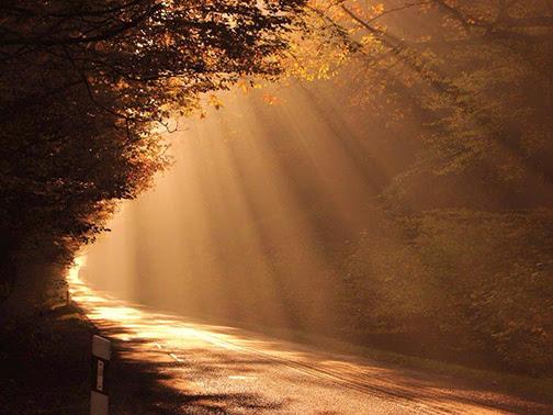 [Photo of sunlight shining on a path]