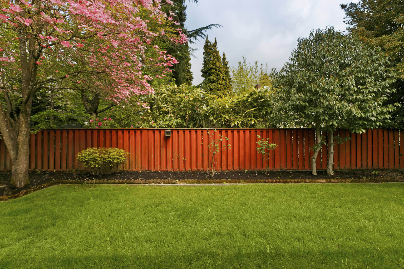 1 Backyard Tree Ideas iStock