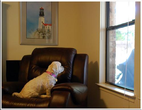 Window-Hunting