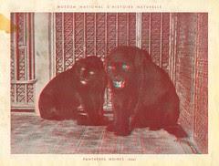 zoorelief p2