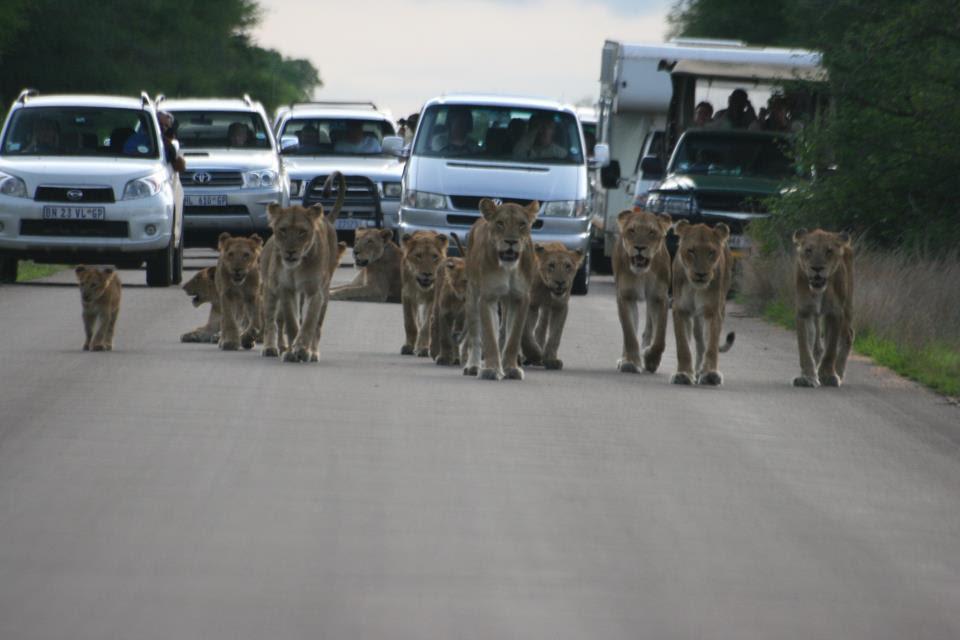 Η αιτία του μποτιλιαρίσματος σε δρόμο της Νότιας Αφρικής.