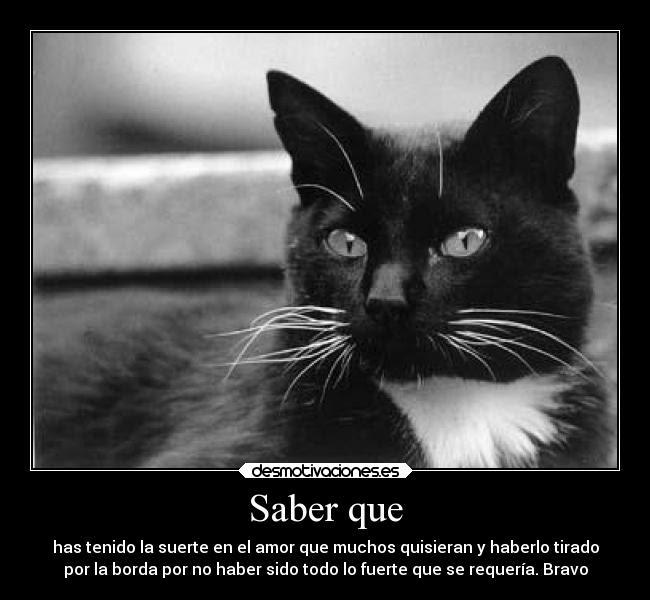 Imagenes De Gatos Con Frases De Amor Descargar Imagenes Gratis