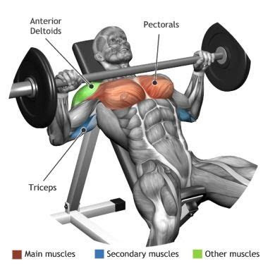 incline bench press   quora