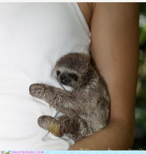 Cute-animals-tiniest-sloth-hug_large
