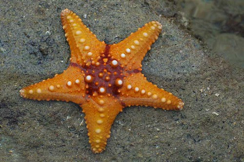 star_red&orange