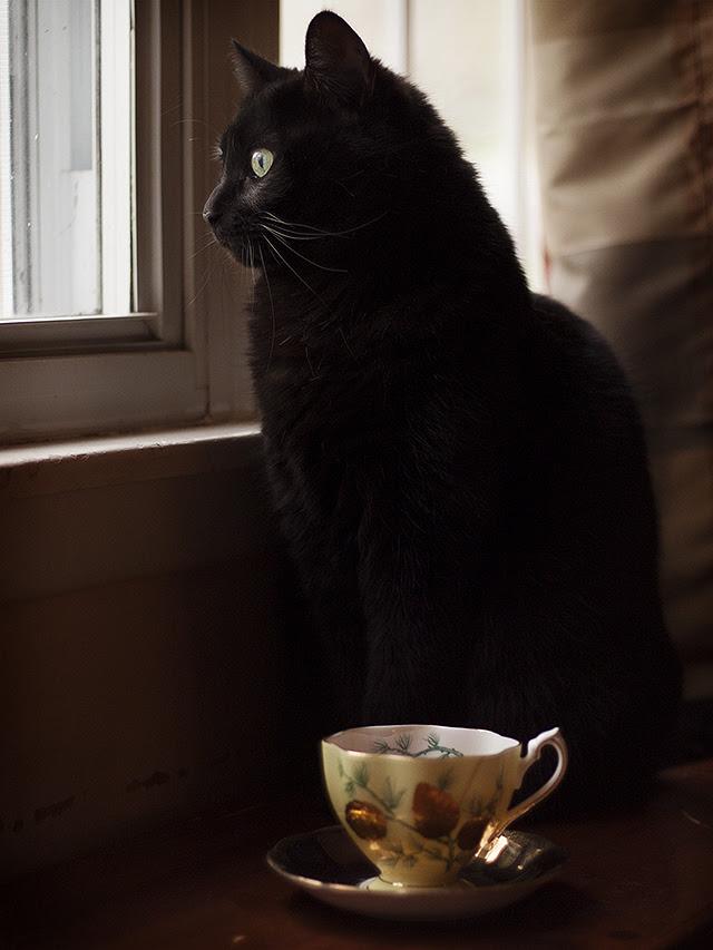tea companion.