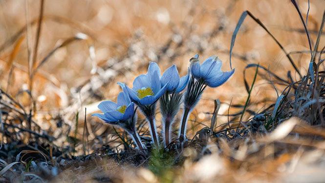 Δείτε τον Χειμώνα να μετατρέπεται σε Άνοιξη μέσα από εκπληκτικές εικόνες