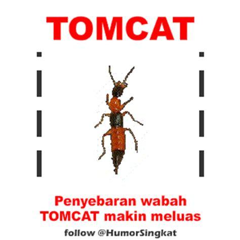 animasi serangga tomcat bergerak dp bbm lucu gambar