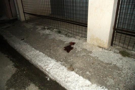 Φρίκη στο Αγρίνιο! 22χρονος κατέσφαξε τη μάνα του μετά από καυγά