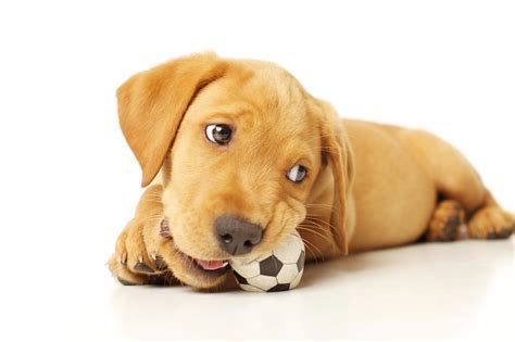 The Dog Trainer : Pica: Eating Things That Aren?t Food