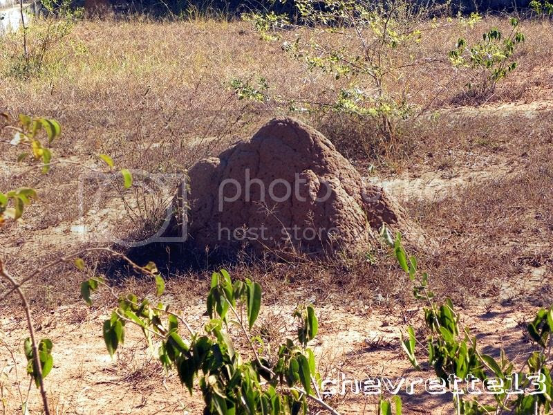 http://i1252.photobucket.com/albums/hh578/chevrette13/Madagascar/DSCN2306Copier_zps9c231ff0.jpg