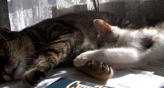 Wczesnym rankiem, gdy Koty śpią...