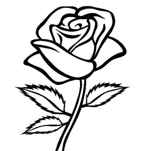 Gambar Bunga Mawar Yang Mudah Digambar Dan Berwarna Bagikan Contoh