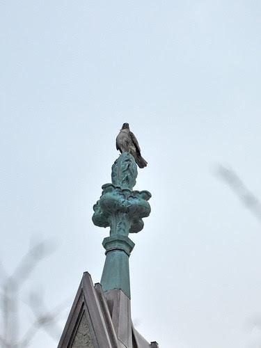 Cathedral Hawk