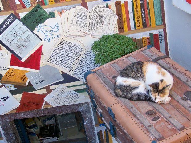 cat-1005964_1280