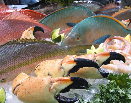 Parrot Fish Stone Crab