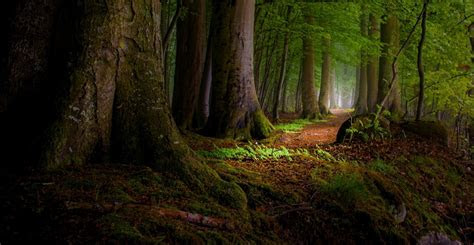 nature landscape moss forest path leaves roots mist