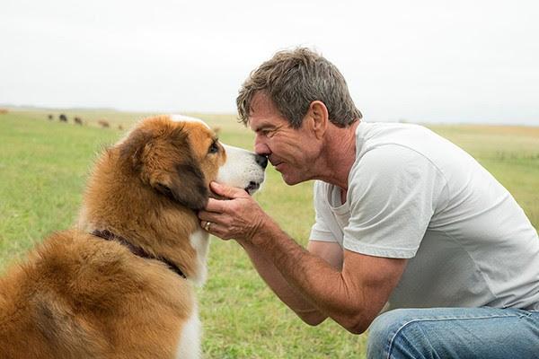 Quatro Vidas de Um Cachorro (Foto: Divulgação)