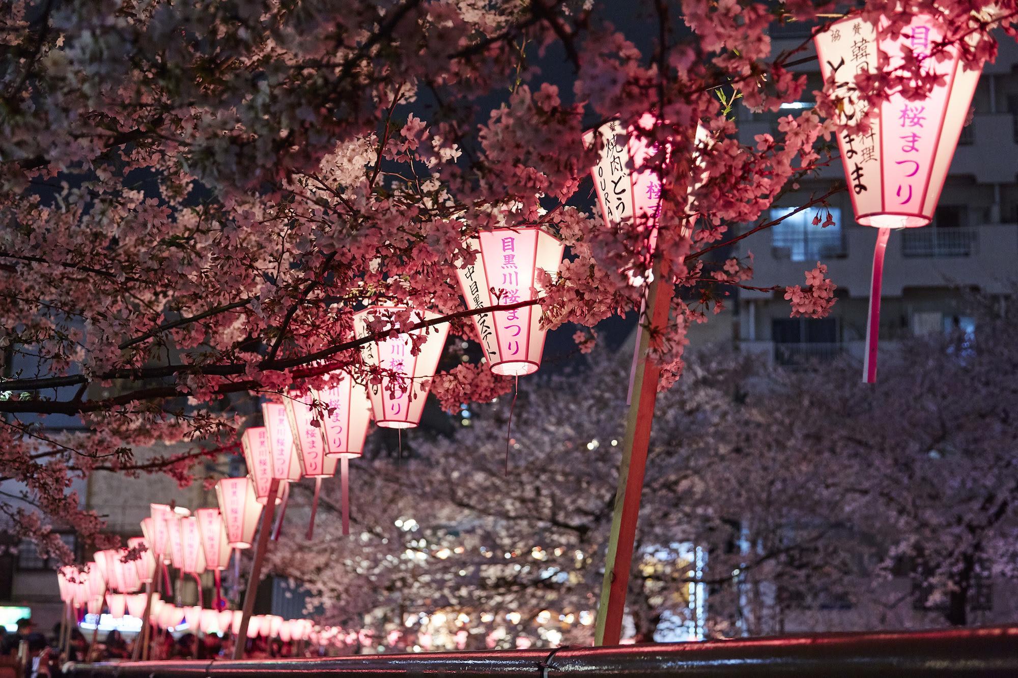 Sakura Season Guide To Japan S Cherry Blossoms Cnn Travel
