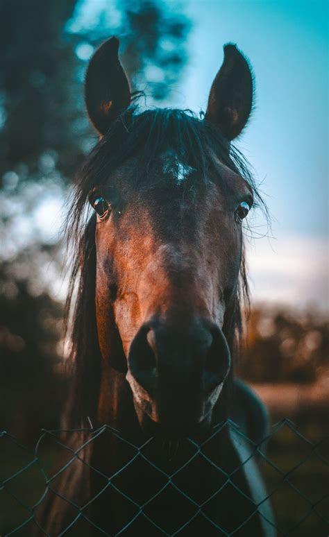 animal horse iphone wallpaper   hd photo  marko blazevic atkerber  unsplash