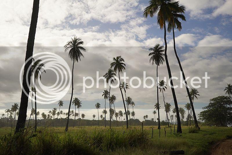 Puerto Rico, River, Contax G2, 35mm, film, photography, mountains, tropical, ocean, palm trees, bamboo, Kain Mellowship photo 03Palms_zps2lirgjzj.jpg