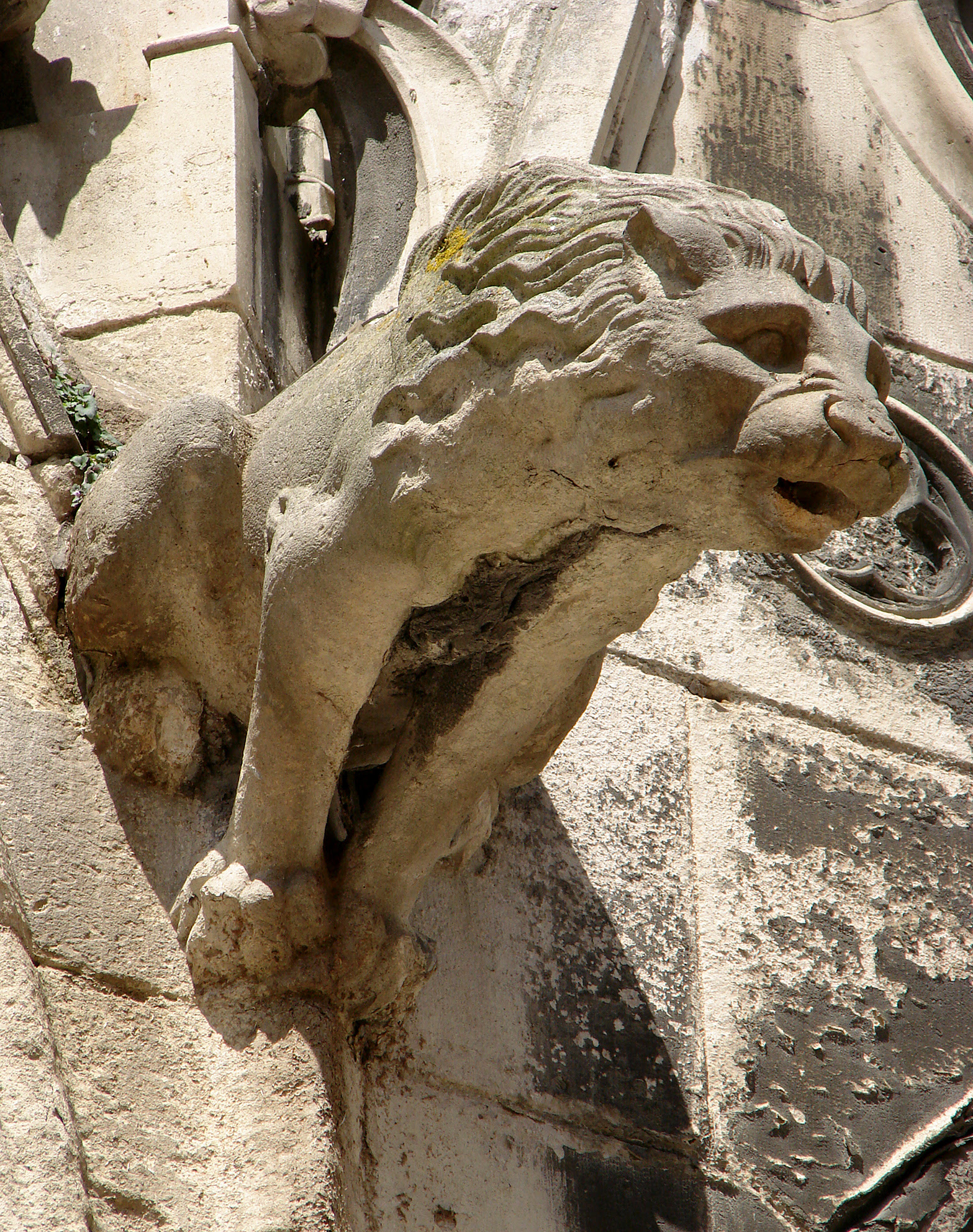 Gargoyle in form of a lion Cathedral Saint-Etienne de Meaux