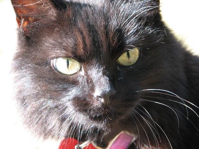Our cat Ebony