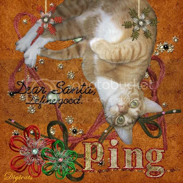 Holly Daze,Ginger Cat,Tabby Cat,Domestic Cat,Holiday Glitter,Happy Holidays