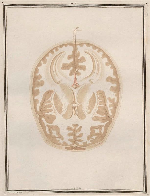 Traité d'Anatomie et de Physiologie (Vol. 2 neuroanatomy) by Félix Vicq D'Azyr 1786 k