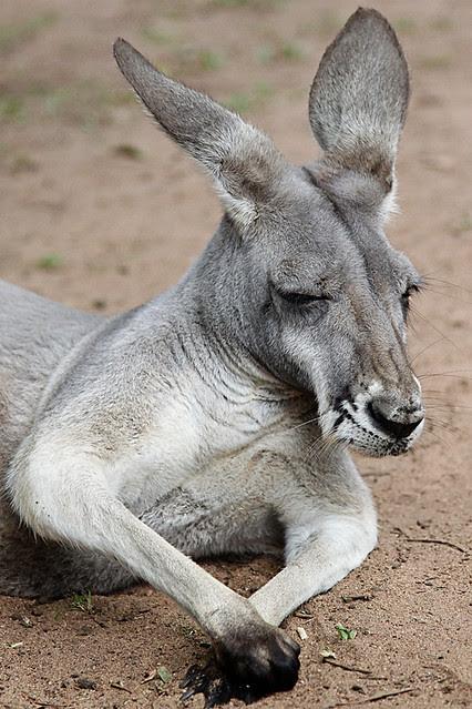 AustraliaZoo3