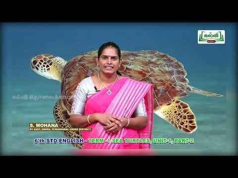 6th English Prose Sea Turtles Term 1 Unit 1 Kalvi TV