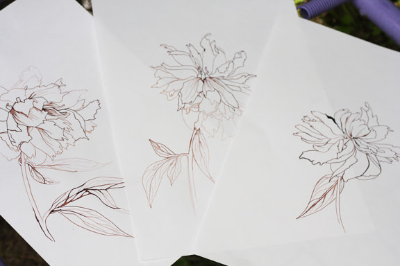 drawings peony
